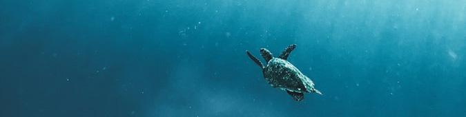 Cetáceos. Fuente: Unsplash