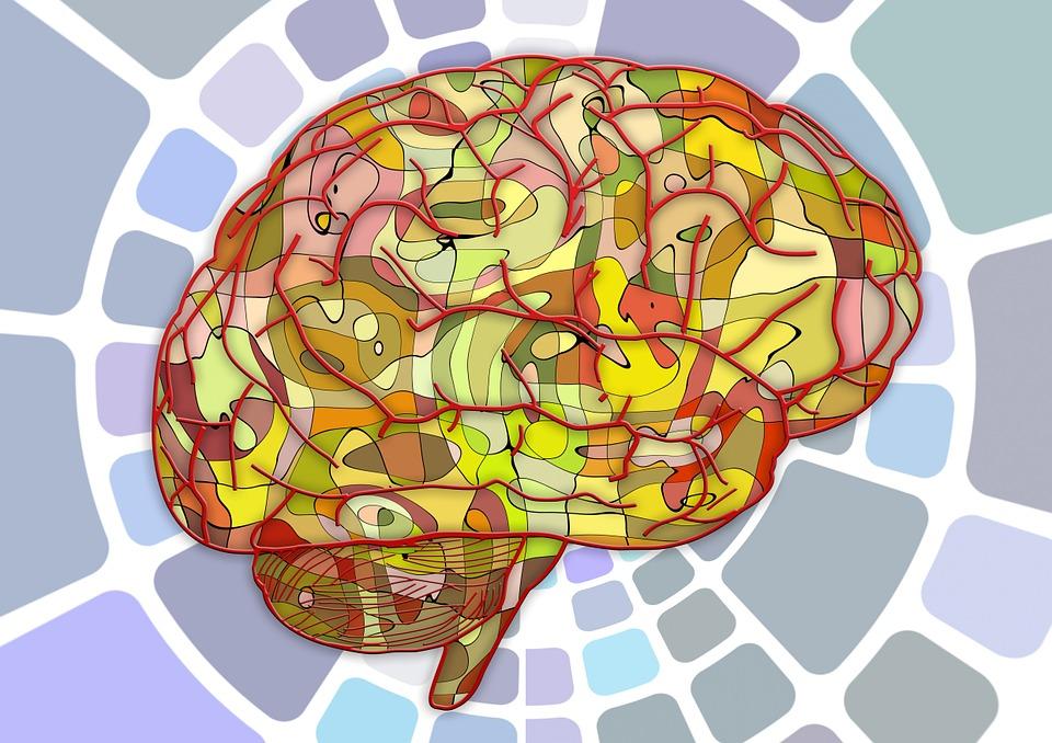 Cerebro. Fuente: Wikimedia