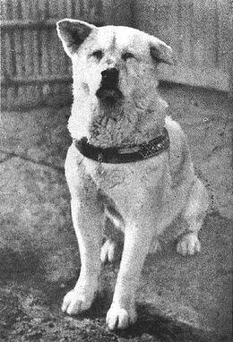 Hachiko, Fuente: Wikimedia