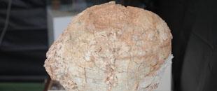 Huevo de Ratites. Fuente: Jesús Guerreiro Real de Asua | Flickr