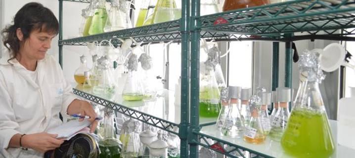Laboratorio del Banco Español de Algas, ubicado en el Parque Científico Tecnológico de Taliarte